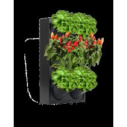 Domowy ogród wertykalny STF1/3PG14/HG